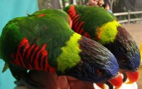 The Lorikeet Forest is one of the outdoor exhibits open during the state health order.